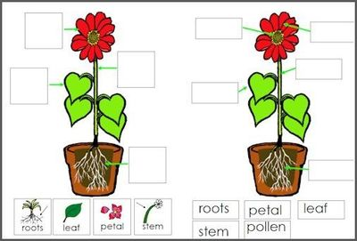 parts of a plant worksheet cut and paste -