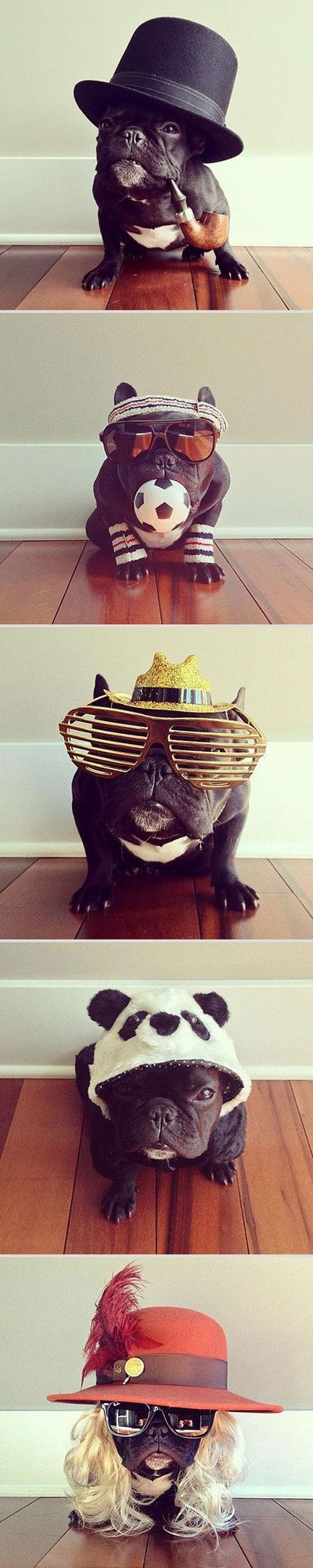While Norm might be the pug with the best selfies on the Internet, Trotter is definitely the master of disguise among the French Bulldogs! With more than 165,000 followers on Instagram, this San Francisco-based hipster pup keeps surprising her fans with n...