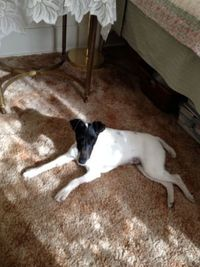 small/medium terrier needs a new home