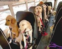 Dog school bus