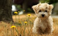 puppy ! want this cutie!