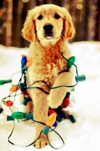 Merry Christmas from these ADORABLE DOGS- 29 PICTURES!