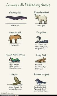 http://icanhascheezburger.files.wordpress.com/2012/07/funny-pictures-animals-with-misleading-names1.jpg
