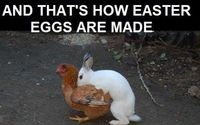 And that's how Easter eggs were made.