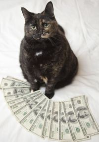 """""""I found out my cat's embezzling from me. You think you know a cat for 10 years and then this...!"""" --Steve Martin"""