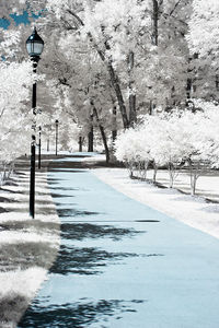 """Infrared Photography """"path"""" byChris Summerville"""