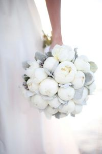 � gorgeous white peonies bouquet with wispy silvery grey eucalyptus leaves!