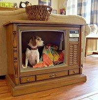 Console TV to Dog Bed