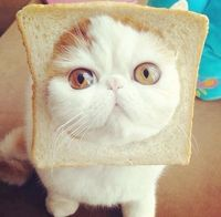 In bread cat