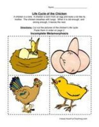 Chicken Life Cycle Worksheet / Preschool items - Juxtapost