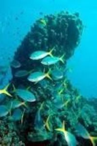 great coral reef - Google Search