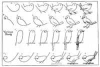 draw some birds