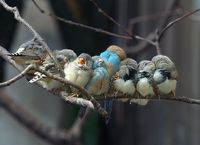 napping birds on a limb
