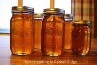 Homesteading At Redtail Ridge: Canning Maple Syrup