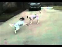 puppy fakes his own death - hilarious!