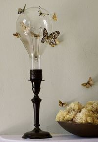 Vellum moths and butterflies
