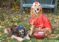 Peggy's Pet Place: They've started a team for Howl-oween