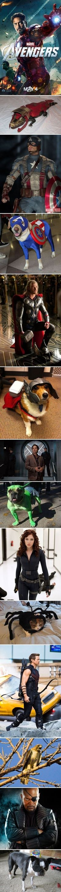 The Avengers and their animal counterparts.