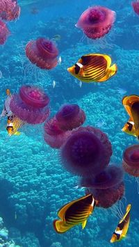 Fish, Jellyfish, Ocean, Coral, Animal, Landscape ;)