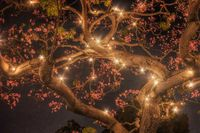 The Twinkling Tabebuia Tree