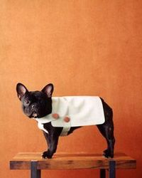 suede doggy coat