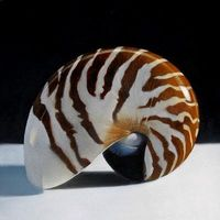 """Nautilus 6x 6"" by M Collier"